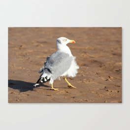 Seagull in a windy day with ruffled feathers Canvas Print
