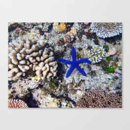 Starfish on the Reef Canvas Print