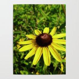One Black Eye Susan In Summer Poster
