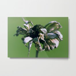 Blume o2 Metal Print
