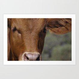 Ellen @ Happy Hooves Farm Sanctuary Australia Art Print