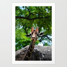 At the Zoo Art Print