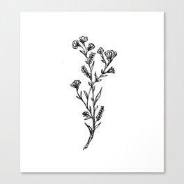 Buttercup Sprig Canvas Print