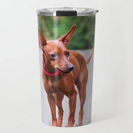Portrait of red miniature pinscher dog Travel Mug