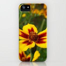 Yellow Marigold Flowers iPhone Case