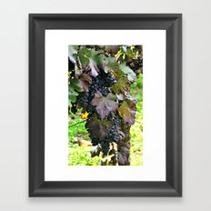 Grapes/Traube Framed Art Print