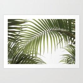 Palm Leaves Photo 01 Art Print