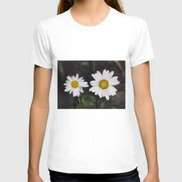 Young And Old Daisies T-shirt