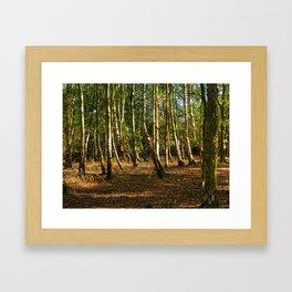 Silver Birch Tree Trunks Framed Art Print