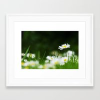 daisies Framed Art Prints featuring Daisies by Nathalie Photos