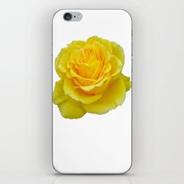 Beautiful Yellow Rose Closeup Isolated on White iPhone Skin