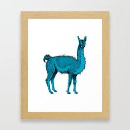 guanaco Framed Art Print
