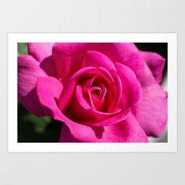 Rose - Pink Art Print