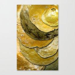 Anomia Simplex Canvas Print