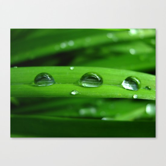 Green Leafs  Canvas Print