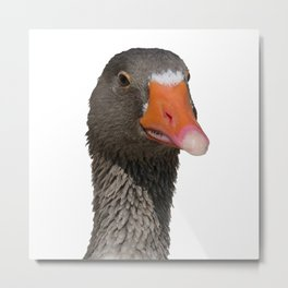 A Wise Duck Takes Care Of Its Bill Metal Print