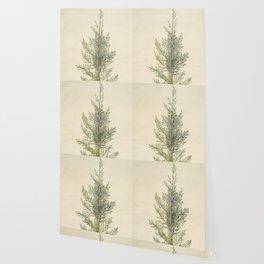 Vintage Botanical Juniper Branch Wallpaper