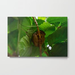 Trees are for Tarsiers Metal Print