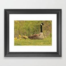 Canada Goose Family Framed Art Print