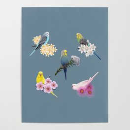 Many Budgies Poster