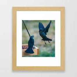 Fighting birds fight over food on a bird feeder Framed Art Print