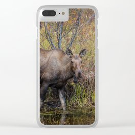 Moose in the Fall, at a Pond, Fairbanks Alaska Clear iPhone Case