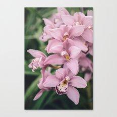 Orchid cascase Canvas Print