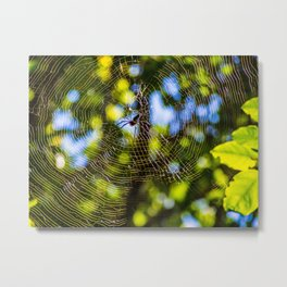 Spider In A Web Metal Print