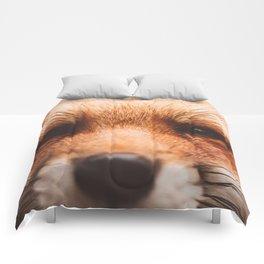 Red fox 2 Comforters