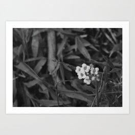 Only Flower Art Print