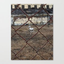 The Silver Hobby Horse 4 Canvas Print