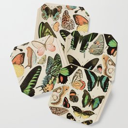 Papillon II Vintage French Butterfly Chart by Adolphe Millot Coaster