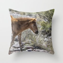 Salt River Wild Foal Throw Pillow