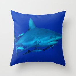 Grey Reef Shark on the Great Barrier Reef Throw Pillow