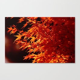 AUTUMN LEAVES - RED MAPLE Canvas Print