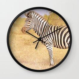 Zebra in the sunlight, Africa wildlife Wall Clock