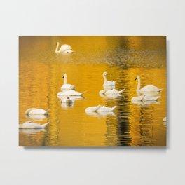 Swan Lake in Gold Metal Print
