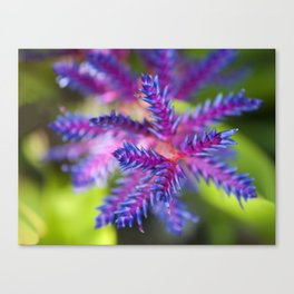 Blue Passion Canvas Print