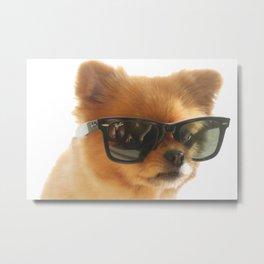 Stylish dog Pepe Metal Print