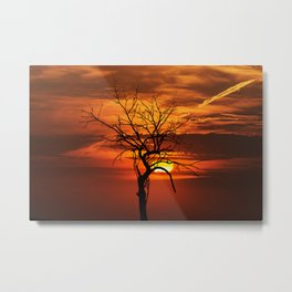 Scary witchy naked tree on sunset Metal Print
