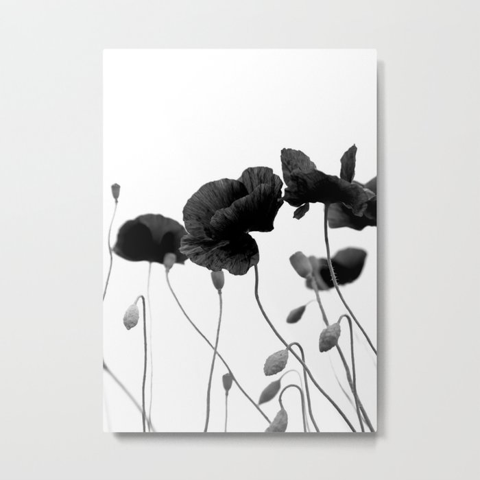Poppy (black and white) Metal Print