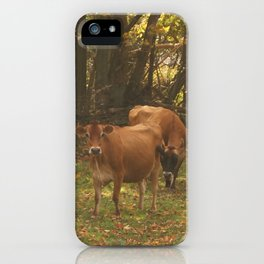 Cows iPhone Case