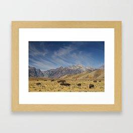 Bison The National Mammal Framed Art Print