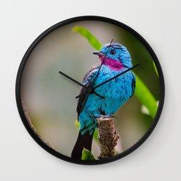 Spangled Cotinga Photo Amazong Rainforest Wall Clock