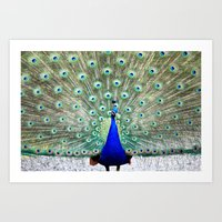 peacock Art Prints featuring Peacock by Whimsy Romance & Fun