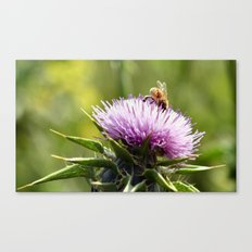 Bee in the right place (at the right time) Canvas Print