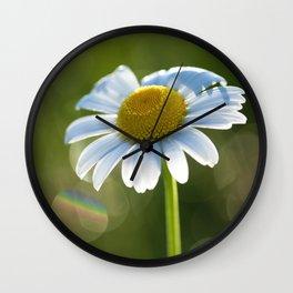 Daisy after rain at backlight Wall Clock