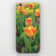 First Sign Of Spring iPhone & iPod Skin