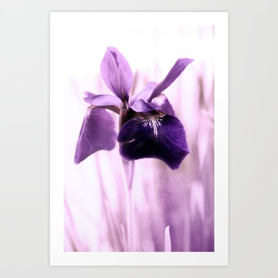 Iris Dream Art Print