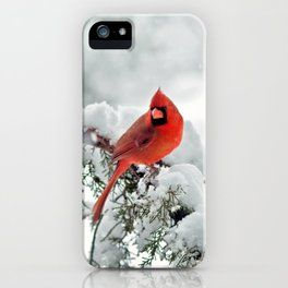 Cardinal on Snowy Branch #2 iPhone Case